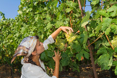 Young woman, vine grower, in the vineyard. Stock Image
