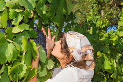 Young woman, vine grower, in the vineyard. Stock Images