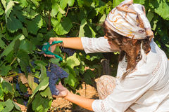 Young woman, vine grower, in the vineyard. Royalty Free Stock Photos