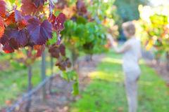 Young woman at a vineyard Stock Photo