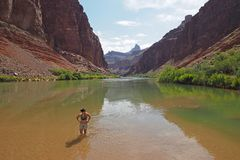 Young woman wading in the Colorado River in the Grand Canyon. royalty free stock photography
