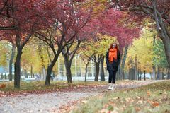 Young woman walk on footpath in autumn park, yellow leaves and trees royalty free stock photography
