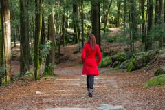 Young woman walking alone on a forest Royalty Free Stock Photos