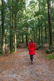 Young woman walking alone on a forest dirt path Royalty Free Stock Photos