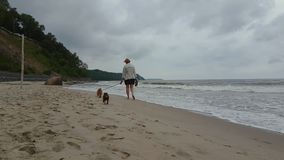 Young woman walking along the beach. With two small dogs stock video footage