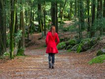Young woman walking away alone on forest path wearing red long coat. Or overcoat. Girl back view of walk in woods of nature park during fall or autumn Royalty Free Stock Photography