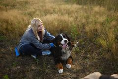 Young woman walking with Bernese Mountain Dog on the summer field. Portrait of a young athletic caucasian woman sitting and scratching the dog`s back. Bernese royalty free stock photo