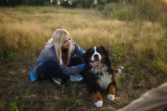 Young woman walking with Bernese Mountain Dog on the summer field. Portrait of a young athletic caucasian woman sitting and scratching the dog`s back. Bernese royalty free stock image