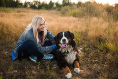 Young woman walking with Bernese Mountain Dog on the summer field. Portrait of a young athletic caucasian woman sitting and scratching the dog`s back. Bernese stock photos