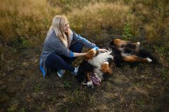Young woman walking with Bernese Mountain Dog on the summer field. Portrait of a young athletic caucasian woman sitting and scratching the dog`s tummy. Bernese royalty free stock photos