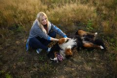 Young woman walking with Bernese Mountain Dog on the summer field. Portrait of a young athletic caucasian woman sitting and scratching the dog`s tummy. Bernese stock image