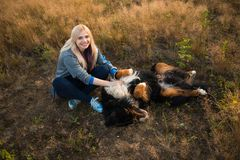 Young woman walking with Bernese Mountain Dog on the summer field. Portrait of a young athletic caucasian woman sitting and scratching the dog`s tummy. Bernese royalty free stock image