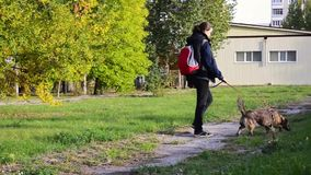 Young woman walking with dog in park stock video footage