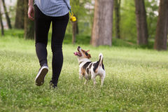Young woman walking with a dog playing training. In the park in springtime Stock Photos