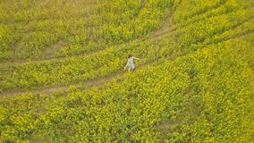 Young woman walking in a flower field. Summer yellow flowers in a field. View from above young woman walking in a flower field. Beautiful summer landscape with Stock Photo