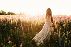 Young woman walking on flower field at sunset on background. Horizontal view with copy space.  royalty free stock images