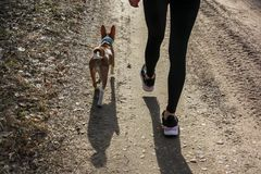 Young woman walking in a forest with a basenji dog stock image