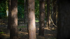 Young woman walking through forest stock video footage