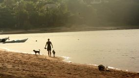 Young woman walking with her dogs on the beach stock video footage