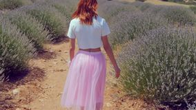 Young Woman Walking In The Lavender Field Stock Photos