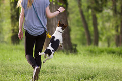 Young woman walking with a jumping dog playing training Stock Photography
