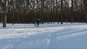 Young woman walking with labrador dog in winter forest, winter holidays concept stock footage