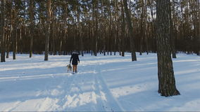 Young woman walking with labrador dog in winter forest, winter holidays concept stock video footage