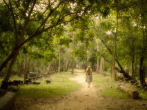Young Woman Walking on Mysterious Path into Enchanted Forest. Young woman in dress walking barefoot on a mysterious path into an enchanted forest stock images