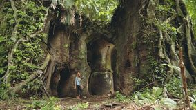 Young woman walking through old Fort Karang Bolong. Young caucasian woman walking through ruins of old Fort Karang Bolong covered with tree roots and vines in stock footage