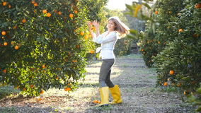 Young woman walking in orange garden. And playing with oranges branches stock footage