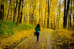Park landscape at autumn. Young woman walking in a park at golden fall, back view Royalty Free Stock Image