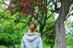 Young woman walking in park. A young woman is walking in a park and is looking at a tree in bloom Royalty Free Stock Image