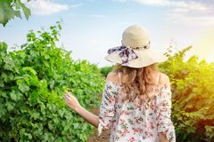 Young woman walking between a row of grape vines.  Royalty Free Stock Images
