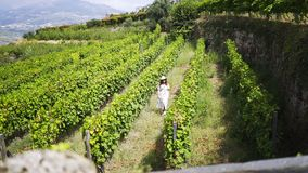 Young woman walking between rows of vineyard stock video footage