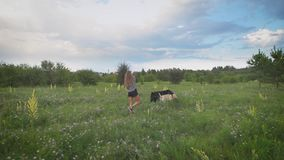 Young woman is walking two dogs in green blooming field in summer evening, dogs are playing, beautiful cloudy sky is in
