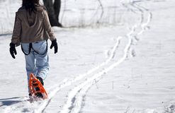 Young woman walking with two orange snowshoes in mountains in wi Stock Image