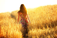 Young woman walking in wheat field Royalty Free Stock Photos