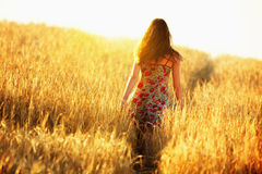 Young woman walking in wheat field Stock Image