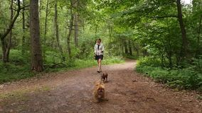 Young woman walking in a wood. With two small dogs stock footage