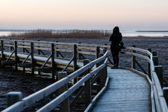 Young woman watching sunrise on a wooden boardwalk with bird wat Stock Photos