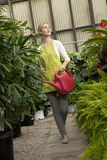 Young woman with watering can in greenhouse Royalty Free Stock Photography