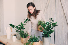 Young woman watering flowerpots at home. Casual lifestyle series in modern scandinavian interior Stock Photos