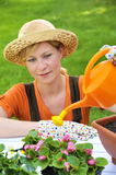Young woman watering flowers Stock Photos