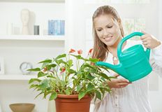 Young woman watering plant Royalty Free Stock Photos
