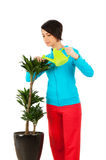 Young woman watering plants Stock Photography