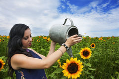 Young woman watering sunflower Royalty Free Stock Photo