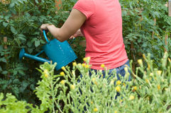 Young Woman Watering Vegetable Garden. Woman watering her vegetable garden plants royalty free stock photo
