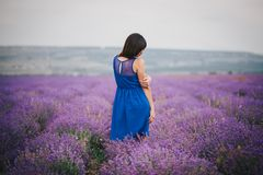 Young woman wearing blue dress standing in a lavender field Royalty Free Stock Image