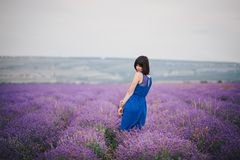 Young woman wearing blue dress standing in a lavender field Stock Photography