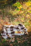 Young woman wearing knitted poncho having picnic in a forest: drinking tea and picking apples Royalty Free Stock Images